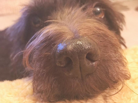 Separation anxiety | Cambridge Puppy Training