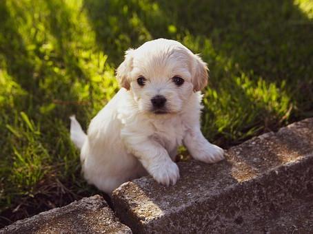 Routine vs Unpredictability   Cambridge Puppy Training