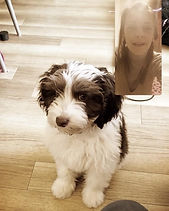 Cambridge Puppy Training 3.jpg