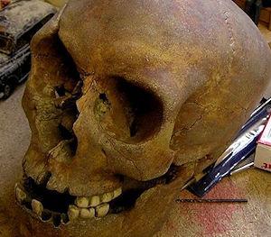 skull for viking skeleton