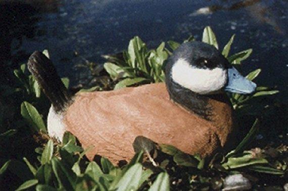 ruddy duck sculpture