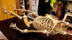 viking skeleton on mount