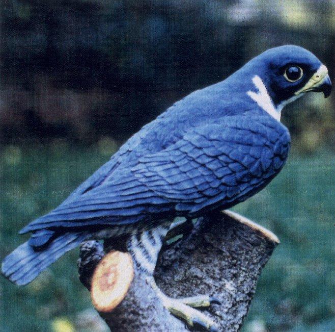 peregrine falcon sculpture
