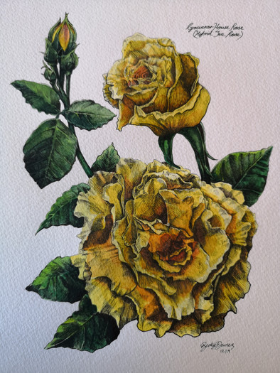 Private Commission - Grosvenor Rose.jpg