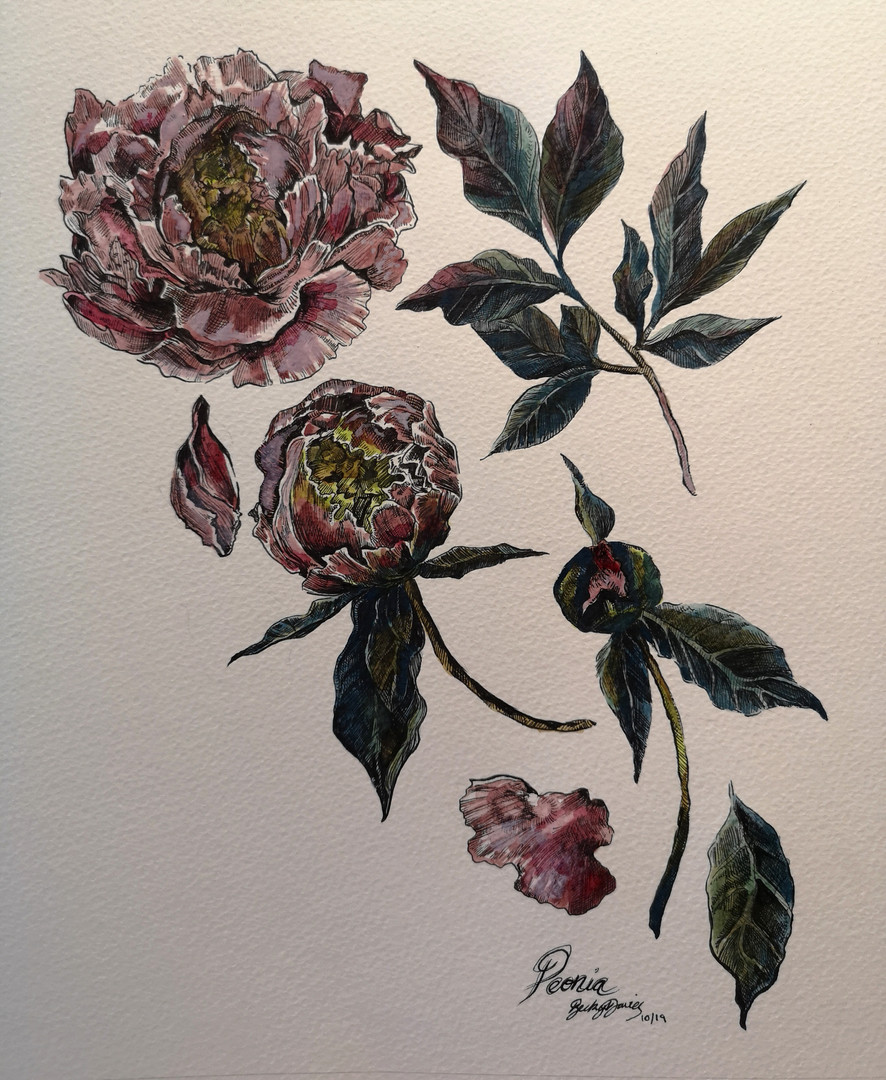 Private Commission - Peony