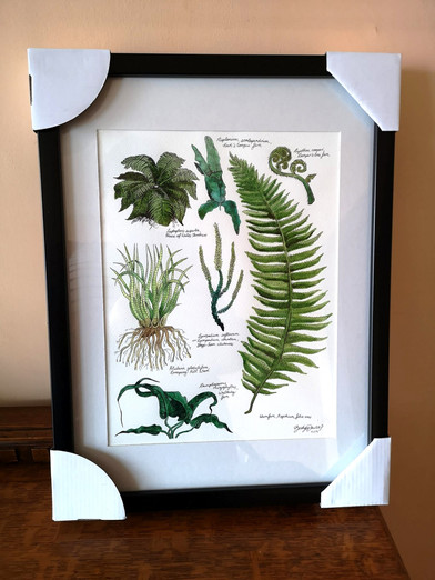Private Commission - Selection of Ferns