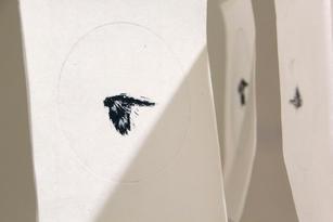 Black Cockatoo 1 [detail]