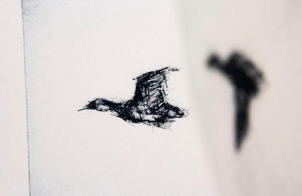 Pacific Black Duck 1 [detail]