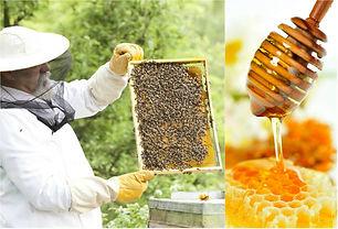 evolucao-da-apicultura-e-do-mel-no-brasi