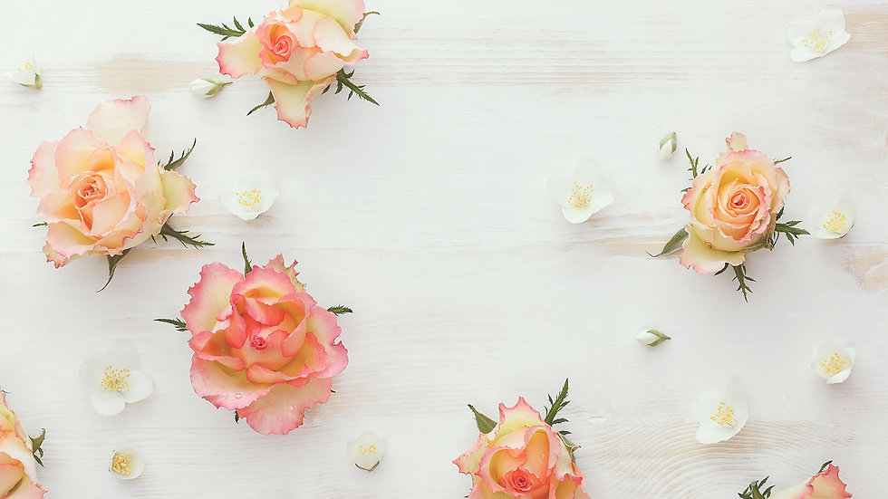 Roses_White_background_541616_2560x1440.