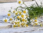 chamomile-1589449_1280.jpg