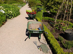 Wheel barrows with gardening tools and plants beside flower beds