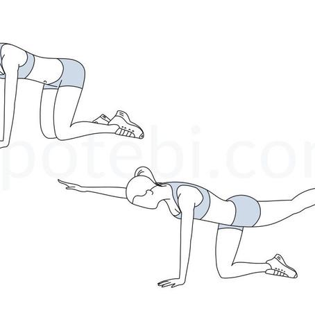 Core Stability Exercise - Bird Dog