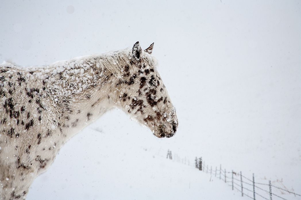 Pony-in-the-snow