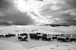 John-Feeding-Cows