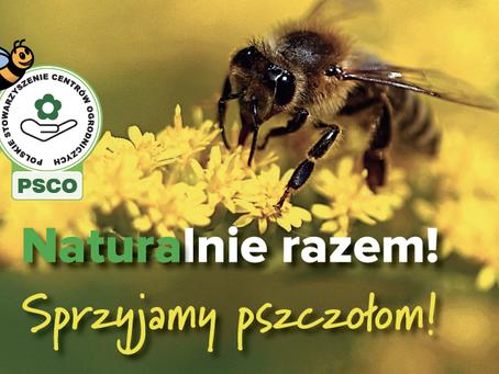 #BeeFriendly, Łazuccy przyjaźni pszczołom
