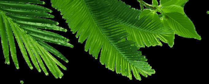 leaves half.png