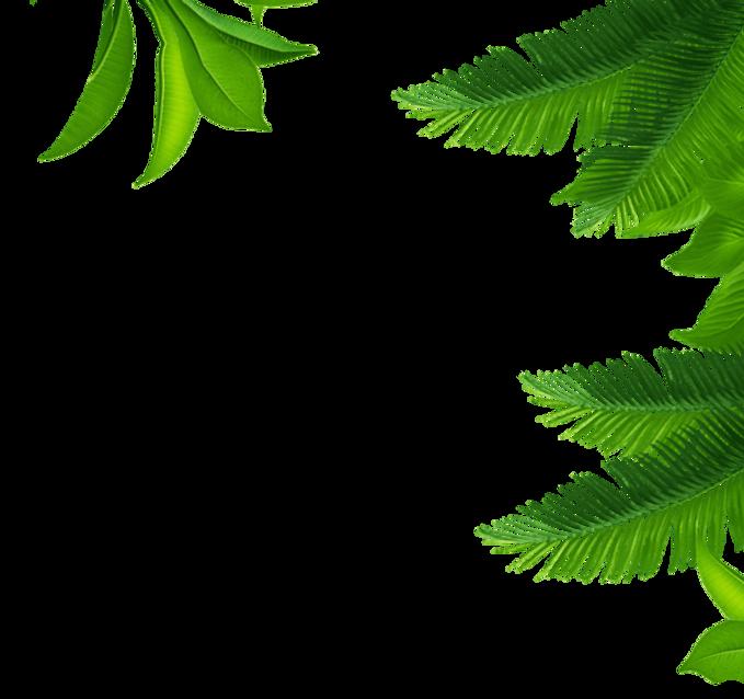 leaves half2.png