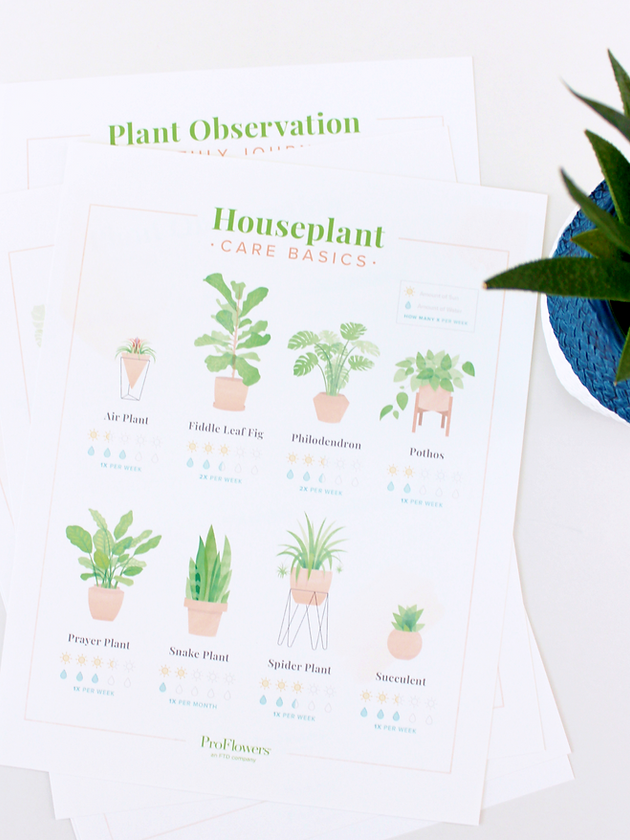 HOW TO CARE FOR YOUR HOUSE PLANTS (+ FREE PRINTABLES) House Plant Chart on weed chart, house paint chart, house color chart, vegetables chart, fish chart, house cat chart, poisonous plants chart, house garden chart, fern chart, house building chart, flower chart, bird chart, house animals chart, apple chart, herb chart,