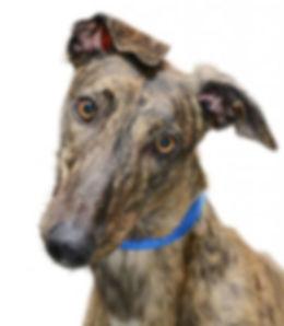 adopting-dog-894x1024.jpg
