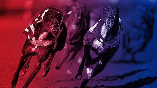 20190703-Greyhounds-01_alamy_b.png