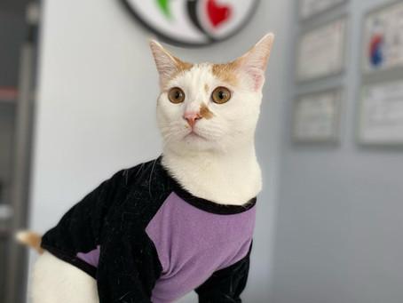 Hırçın Kediler Nasıl Sakinleştirilir?