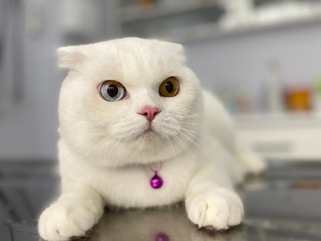 Kediniz Sizi Çok Tırmalıyorsa ;