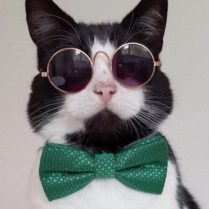 Retro foto naočale za mačke i male pse