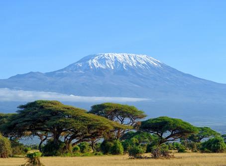 Pollard Coffee Featured Blend: Tanzania Kibosho Peaberry