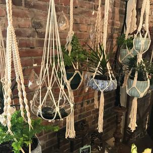 Herban Bloom Hanging Plants