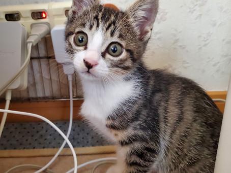 2ヵ月の子猫、るいまでもが