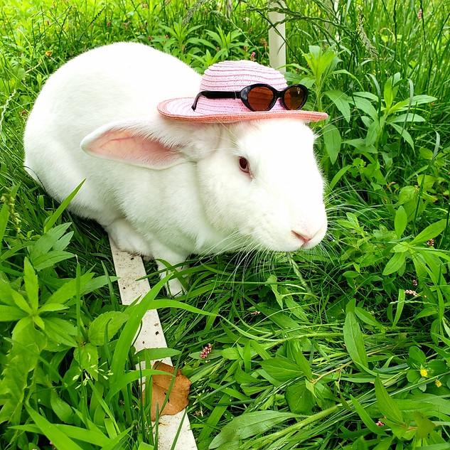 spay and neuter, rabbit, new york, exotic vet
