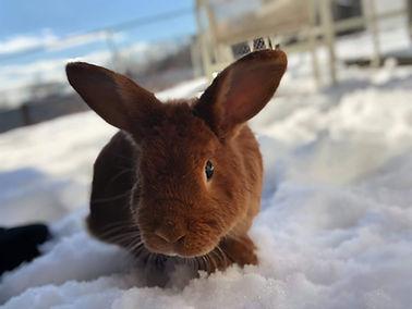 rabbit visits exotic vet in new york