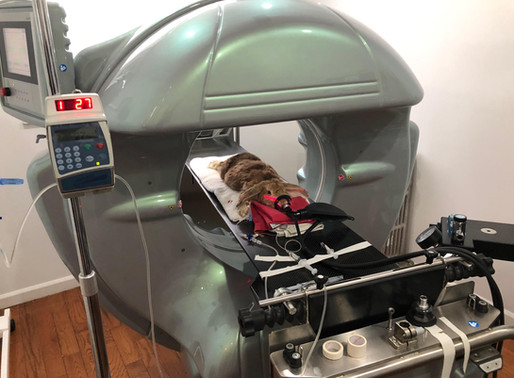 Why LIBEVC Has a CAT-Scan and Why CT Scans Save Lives in Small Mammals & Exotic Pets