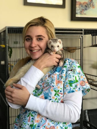 pet ferret getting attention at exotic pet vet new york