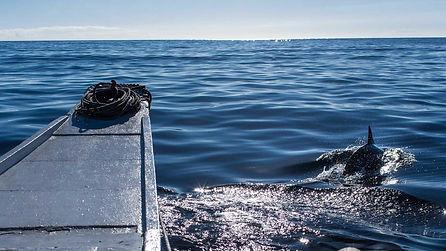 Nous avons vécu une journée parfaite à Pamilacan avec la rencontre des dauphins spinner en route