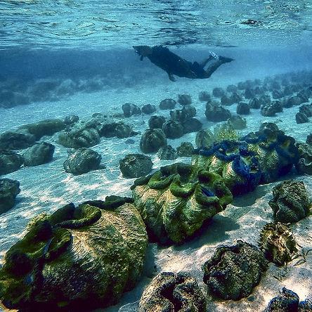 Organisez vos plongées ou sorties snorkeling à Camiguin avec Philippines Tropicales et escale sur le sanctuaire aux bénitiers