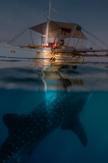 Whale-shark-web-6x4_edited.jpg