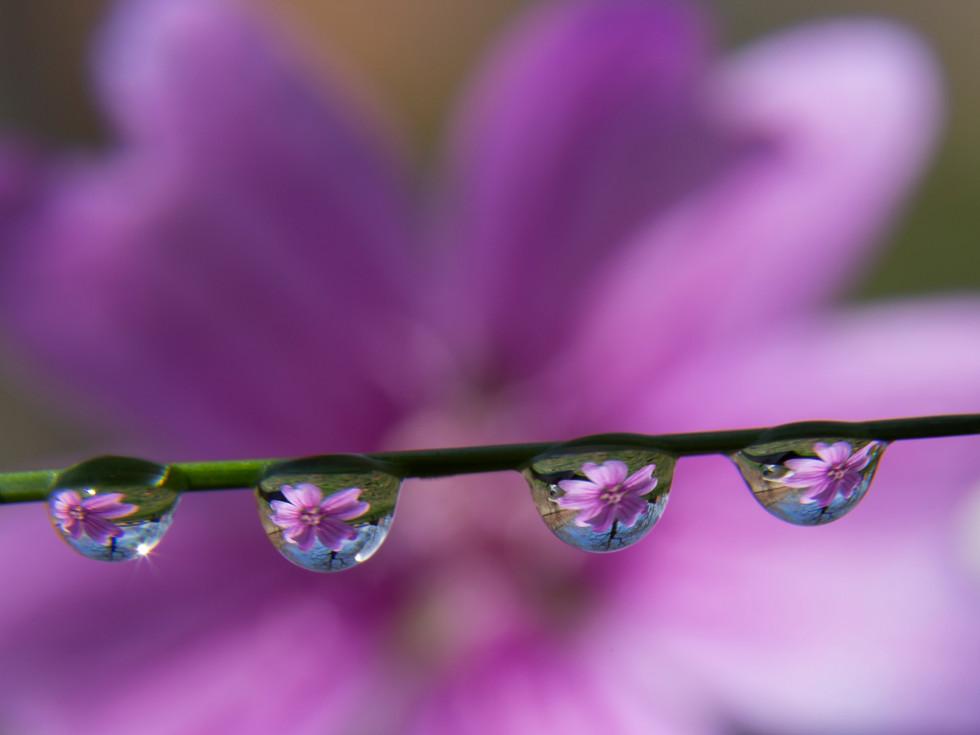 Un fiore in una goccia