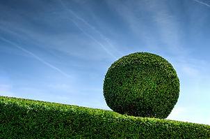 bush-garden-gardener-9204.jpg