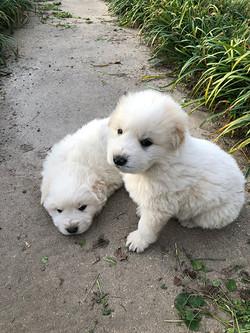 Madison's Babies