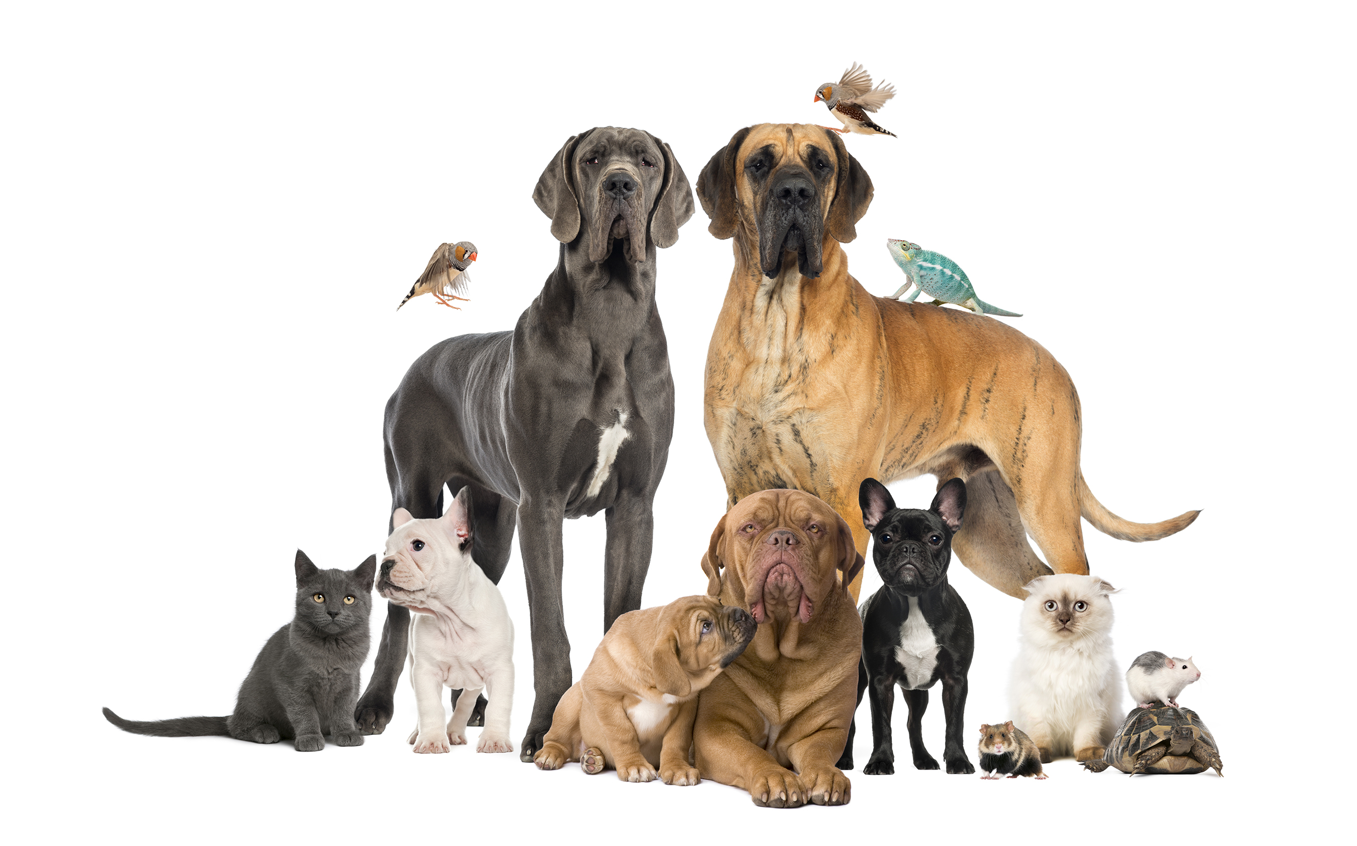 group-of-pets-dog-cat-bird-reptile-rabbi