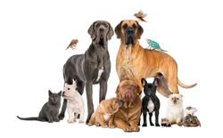 group-of-pets-dog-cat-bird-reptile-rabbi