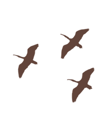 birds_three.png