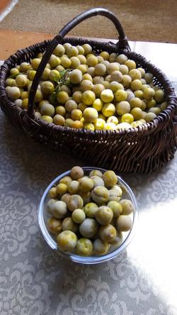 plum from french garden