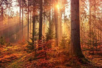Autumn trees Surrey