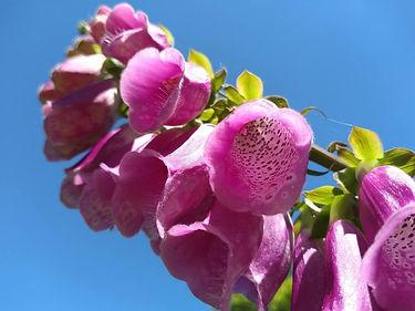 Flower close up meditation