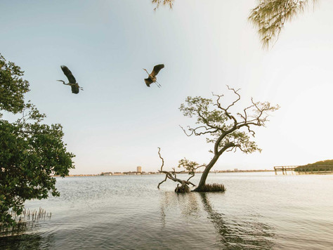 Florida surft auf der grünen Welle