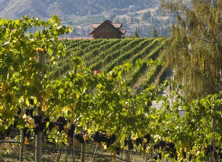 Okanagan Nummer eins der weltweiten Weindestinationen