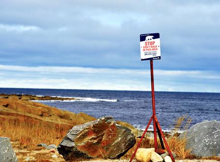 Churchill, Manitoba: Die Hauptstadt der Eisbären